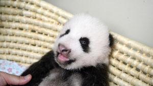 結婚相談所 東京 20代 30代 panda1