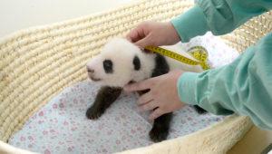 結婚相談所 東京 20代 30代 panda2