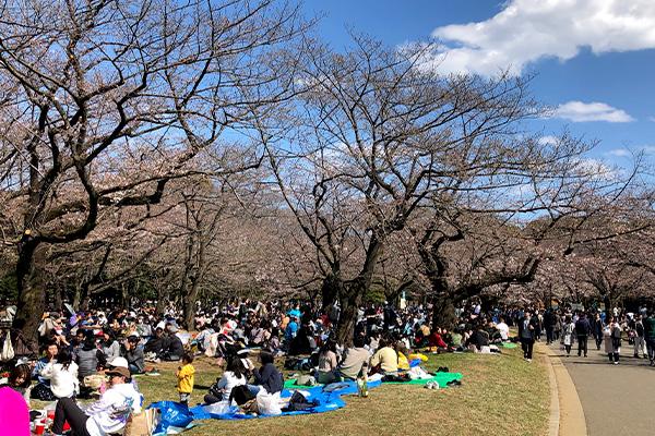 結婚相談所 東京 渋谷 20代 30代 ブログ 20190320c