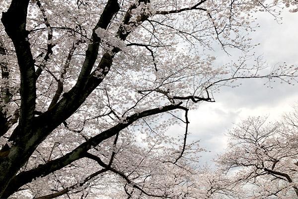 結婚相談所 東京 渋谷 20代 30代 ブログ 20190402b